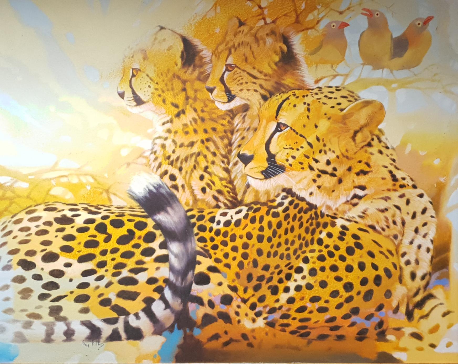 peter cheetahs