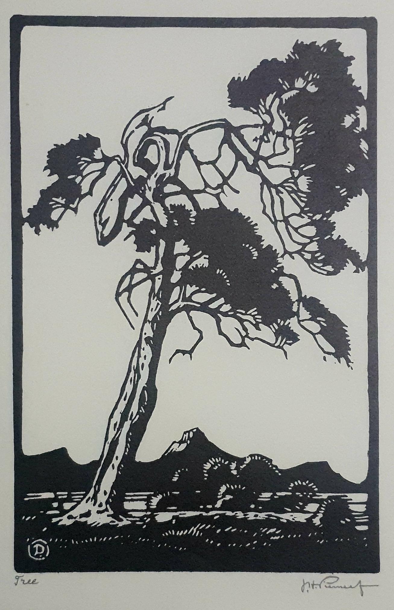 pierneef Tree
