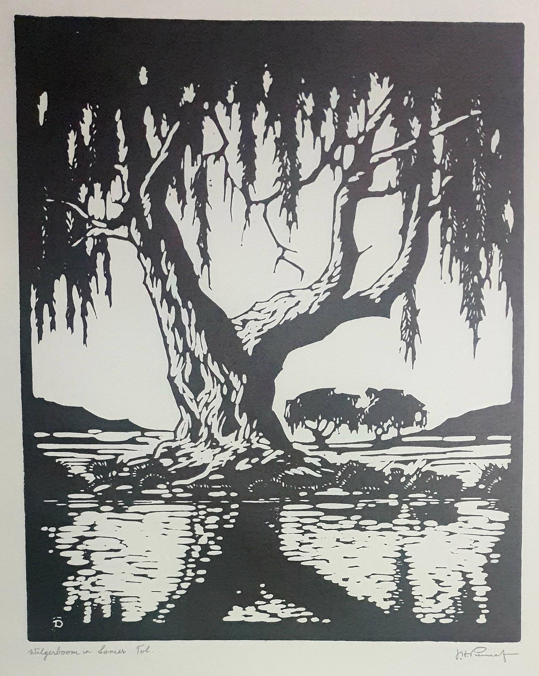 pierneef Wilgerboom in Somer Tvl